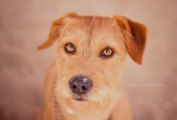 porque os cães também devem ter sessões fotográficas.